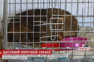 На Прикарпатье спасли испуганного пса, который больше года прожил в теплотрассе