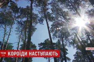 Україна втратила 400 тисяч гектарів лісів через короїда