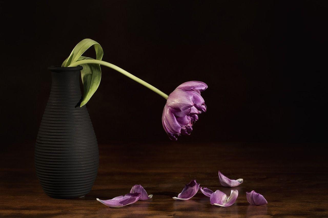 Зів'ялий тюльпан