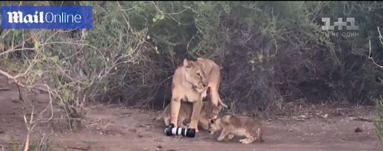 В Африке львица украла дорогую камеру у рассеянной туристки и отдала своим детям