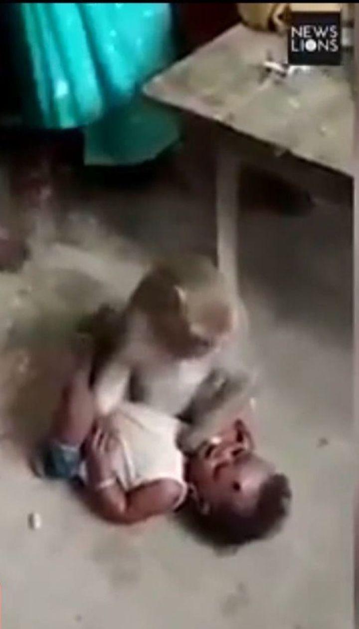 В індійському поселенні мавпа поцупила дитину