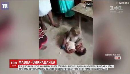 В индийском поселении обезьяна украла ребенка