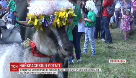 На Тернопольщине устроили конкурс красоты среди коз