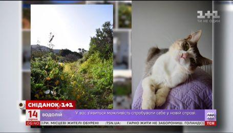 У Греції пропонують роботу мрії для любителів котиків