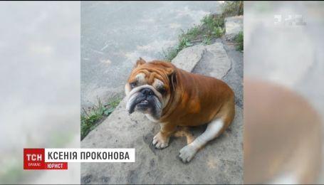 В столице пес без намордника загрыз бульдога и ранил его владельцев