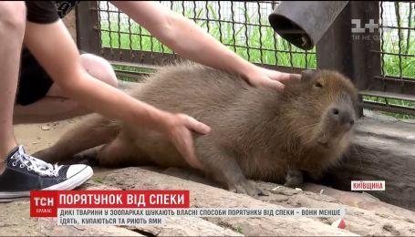 Работники украинских зоопарков придумывают, как спасти животных от жары