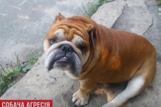 У Києві оскаженілий пес без намордника загриз на смерть бульдога та поранив його власників