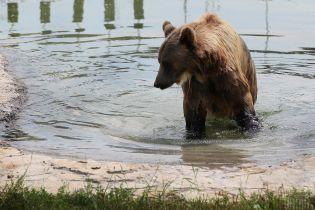 Водні процедури, морозиво і кавуни: як в українських зоопарках тварин рятують від спеки