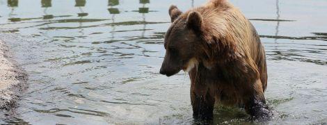 Водные процедуры, мороженое и арбузы: как в украинских зоопарках животных спасают от жары