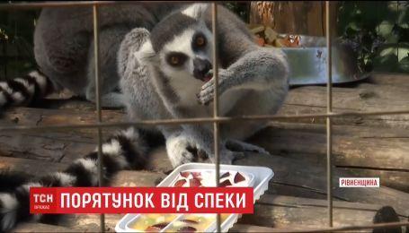 Басейни, морозиво, кавуни. Які способи порятунку від спеки шукають для тварин у зоопарках