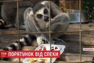 Бассейны, мороженое, арбузы. Какие способы спасения от жары ищут для животных в зоопарках