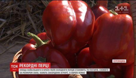 На Херсонщині виростили найбільше в Україні поле солодкого перцю