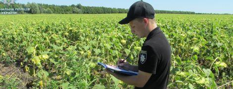 На Луганщине тысячи кустов конопли маскировали под подсолнечник