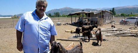 Турецький клуб продав 18 футболістів і купив 10 кіз, щоб відбити гроші на молоці