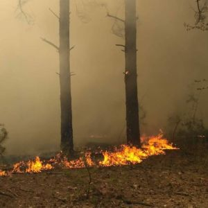На Николаевщине масштабно вспыхнул лес, тушение продолжается несколько часов