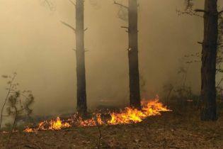 Під Харковом спалахнув хвойний ліс, до гасіння задіяли пожежний гелікоптер