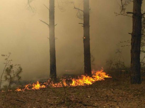 На Миколаївщині масштабно спалахнув ліс, гасіння триває декілька годин