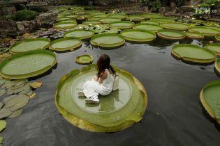 Відчуй себе Дюймовочкою: у парку на Тайвані відвідувачам дозволили посидіти на гігантських лотосах