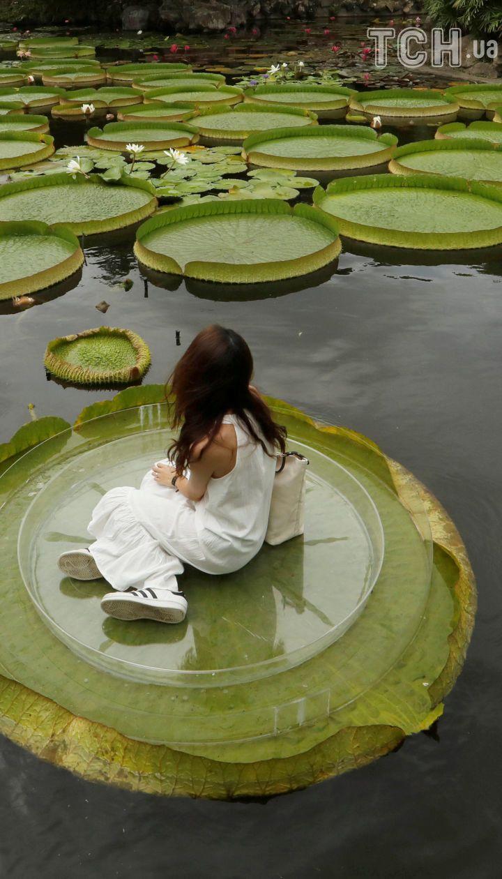 Почувствуй себя Дюймовочкой: в парке на Тайване посетителям разрешили посидеть на гигантских лотосах