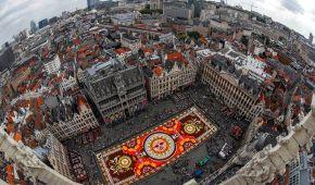 У центрі Брюсселя виклали гігантський килим із півмільйона квіток