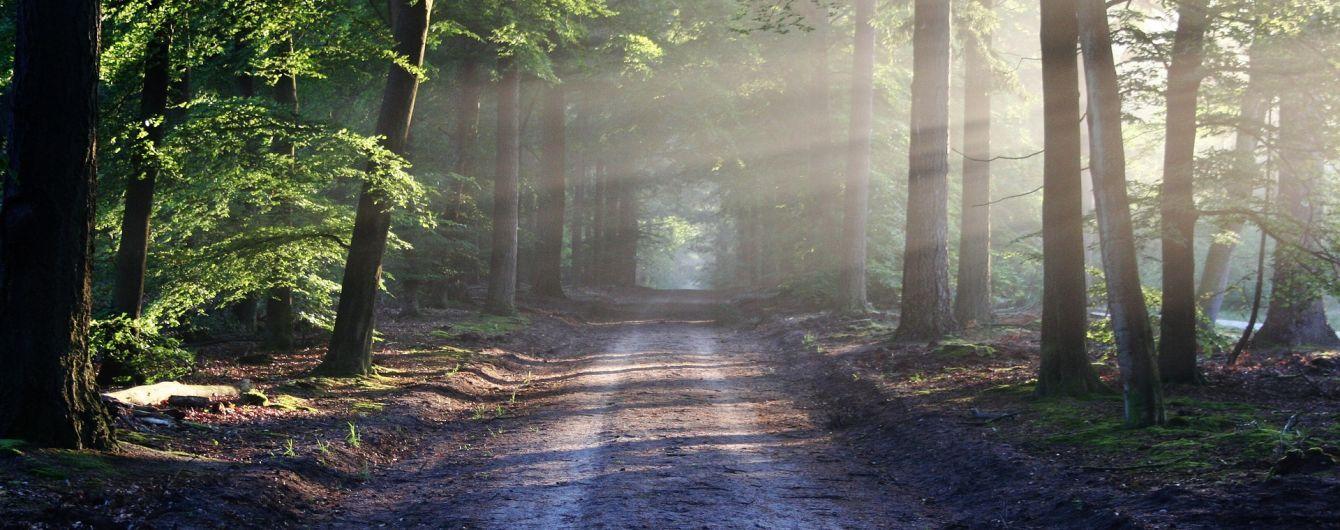 На Київщині державі повернули ліс вартістю півмільярда гривень