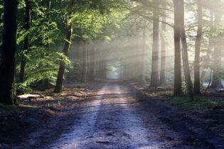 В Киевской области государству вернули лес стоимостью полмиллиарда гривен