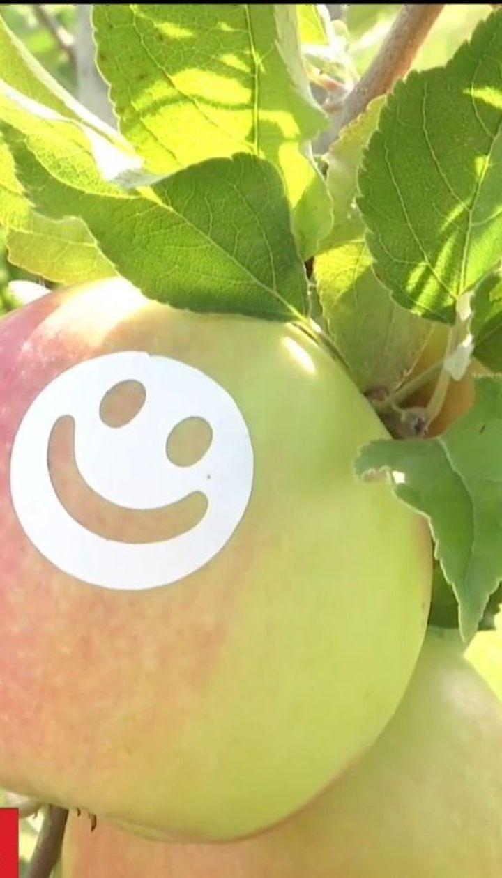 """На Вінниччині виростили """"усміхнені"""" яблука"""