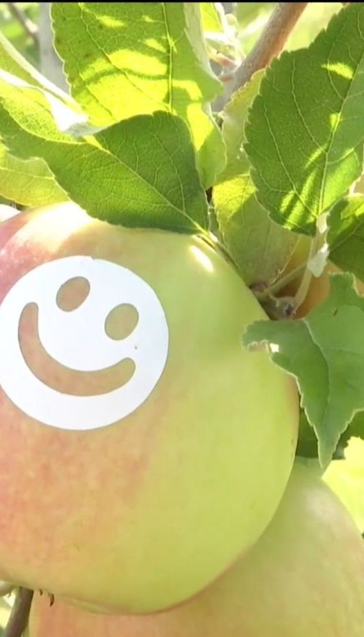 """В Винницкой области вырастили """"улыбающиеся"""" яблоки"""