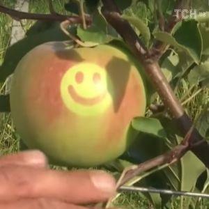 На Винничине вырастили яблоки со смайликами