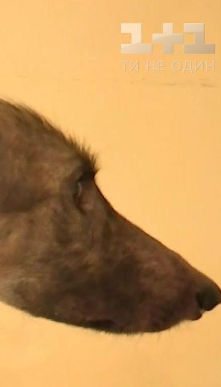 Кожа и кости. В Луцке хозяева заморили голодом собаку едва ли не до смерти