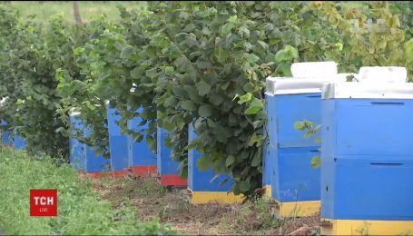 В Україні масово гинуть бджолині родини