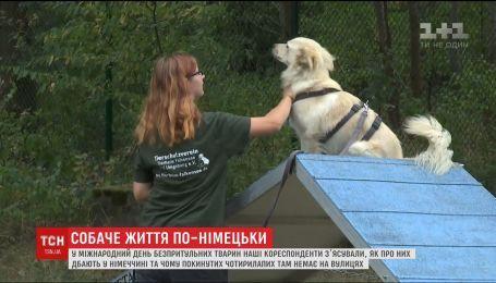 Собаче життя по-німецьки. Як живуть тварини у притулках закордоном