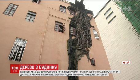 На півдні Китаю масивне дерево проросло у 4-поверхівку