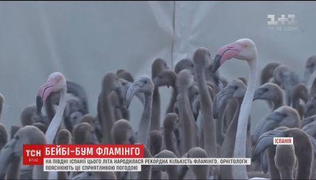 На юге Испании родилось рекордное количество фламинго