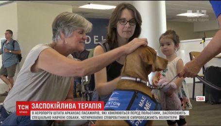 В аэропорту Арканзаса пассажиров, которые боятся летать, подбадривают специально обученные собаки