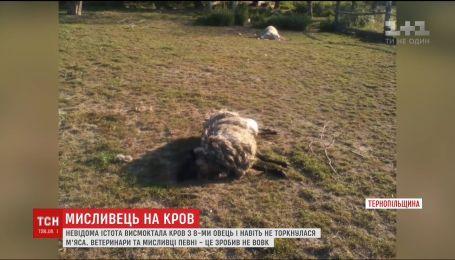 На Тернопольщине неизвестное существо убило за ночь восемь овец