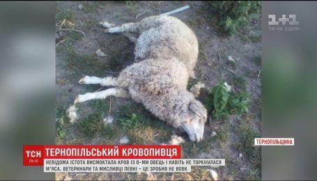 Вампіри на Тернопільщині: невідома істота випила кров з восьми овець і не торкнулася м'яса