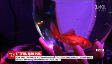Паризький океанаріум почав рятувати непотрібних господарям золотих рибок
