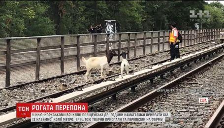 В Нью-Йорке две козы остановили движение метро