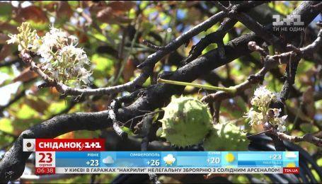В Киеве снова расцвели каштаны