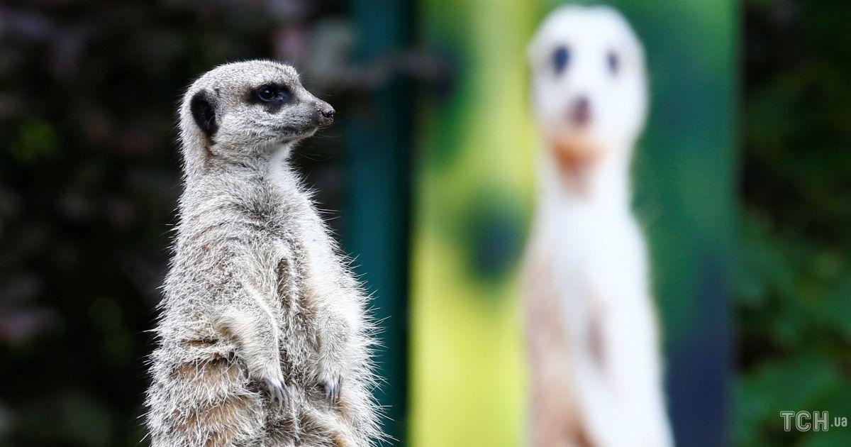 Зоопарк Лондона