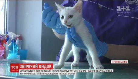 В Тернополе мужчина перекинул через высокий забор соседям бесхозного котенка