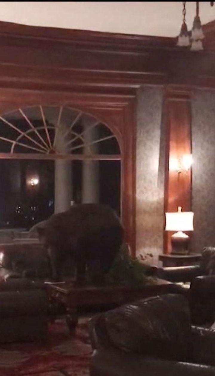 У готель в американському штаті Колорадо завітав бурий ведмідь