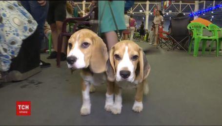 Международная выставка собак состоялась в Киеве