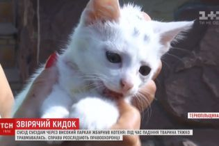 У Тернополі чоловік жбурнув сусідам 2-місячне кошеня, немов м'ячик