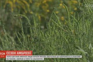 В Украине начался пик цветения амброзии, который вызвал аллергию у миллионов людей