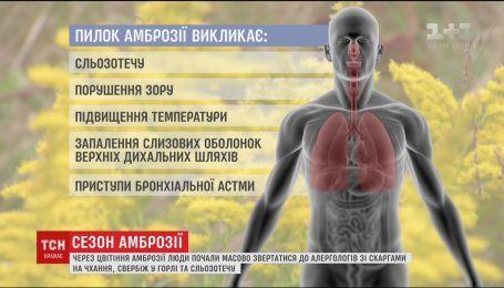 Через цвітіння амброзії люди почали масово звертатися до алергологів