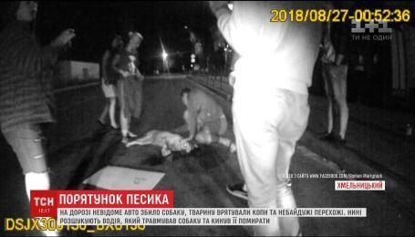 В Хмельницком копы и неравнодушные горожане спасли собаку, которую сбила машина