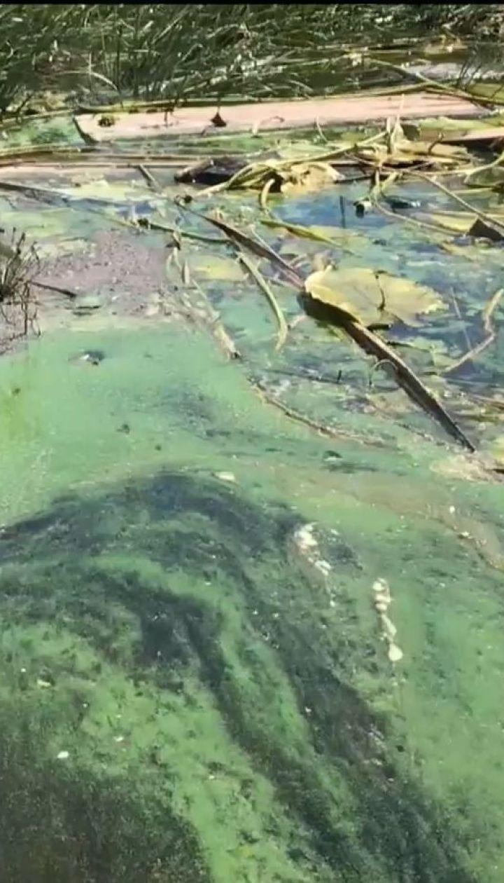 ТСН перевірила в лабораторії водорослі, якими покрився Дніпро