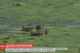 Дніпро атакують ціанобактерії, які вбивають рибу і є небезпечними для людей